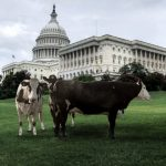 Plant-Based Brands Lobby Against Dairy Pride Act