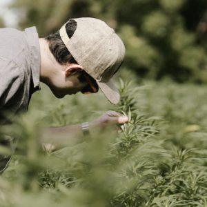Passage of Farm Bill Poised to Reshape Hemp, CBD Product Landscape
