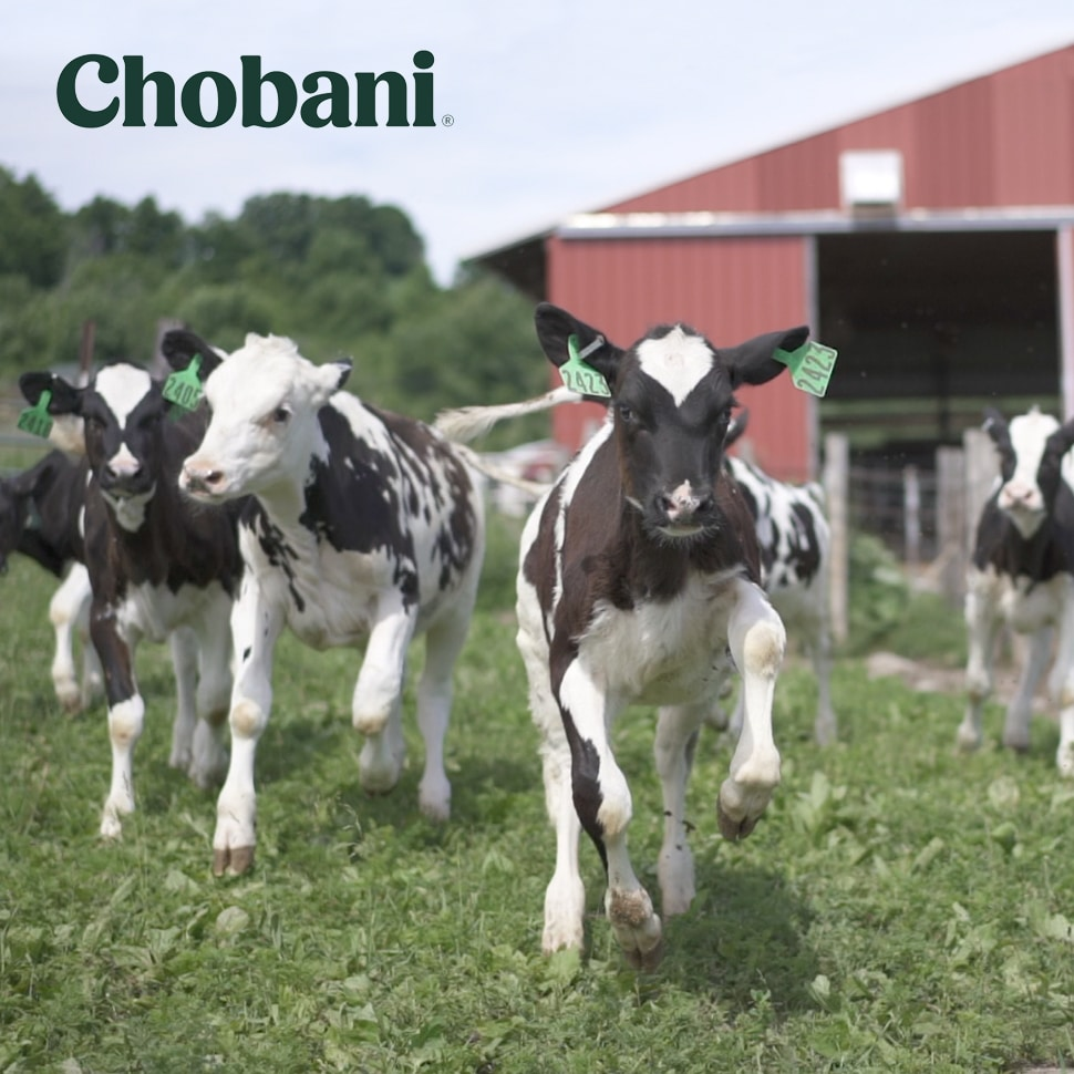 Chobani, Fair Trade USA to Launch Dairy Certification Label