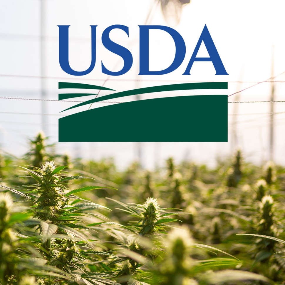Industry Responds to USDA Hemp Guidelines